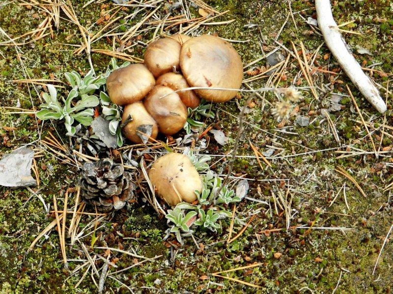 летние грибы фото 2