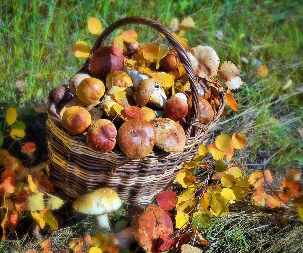 фото урожая грибов Забайкалья 2019 1