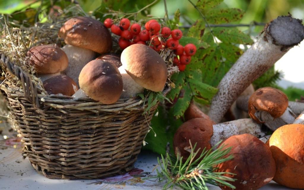 фото урожая грибов Забайкалья 2019 5