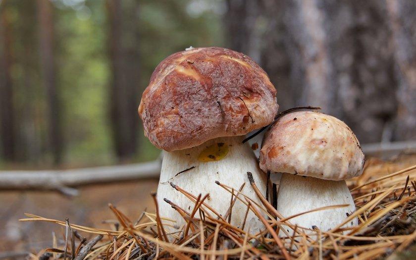 грибы Забайкалья 2019, фото названия 1