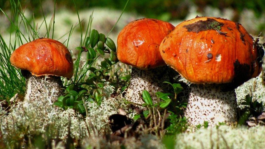 грибы Забайкалья 2019, фото названия 2