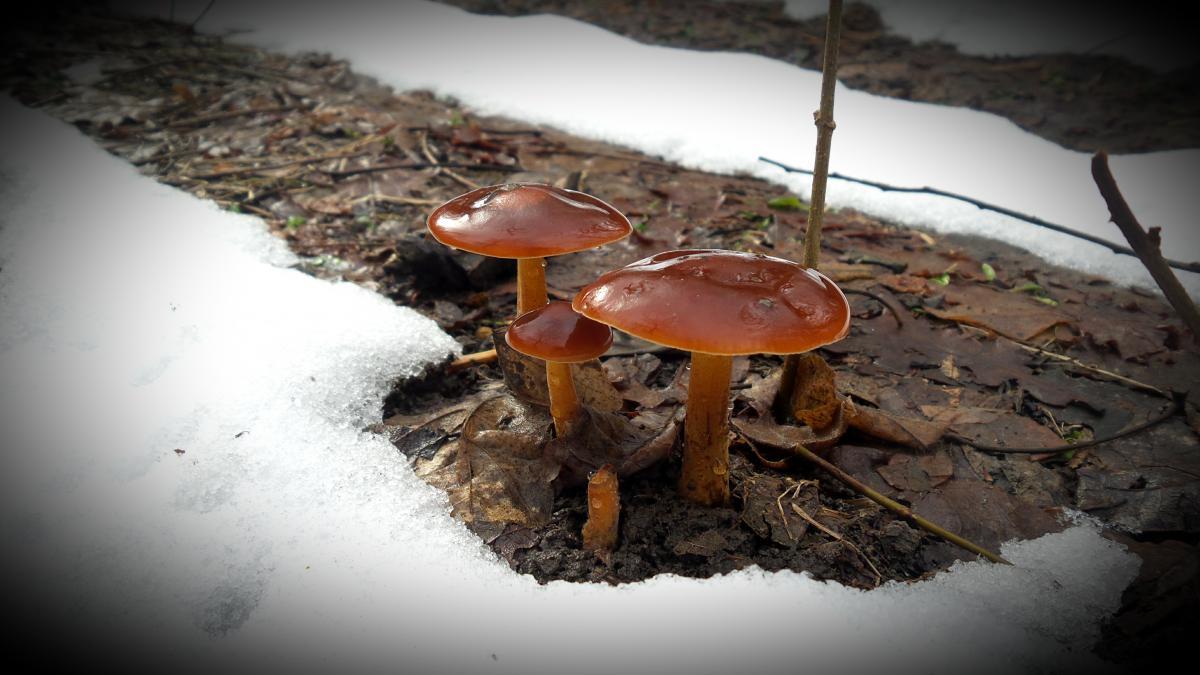 весенние грибы 2019 в Подмосковье, сбор в лесу фото 4