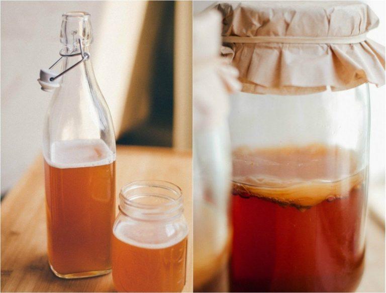 чай гриб как вырастить с нуля