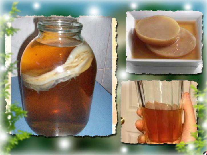 фото как вырастить чайный гриб дома 2