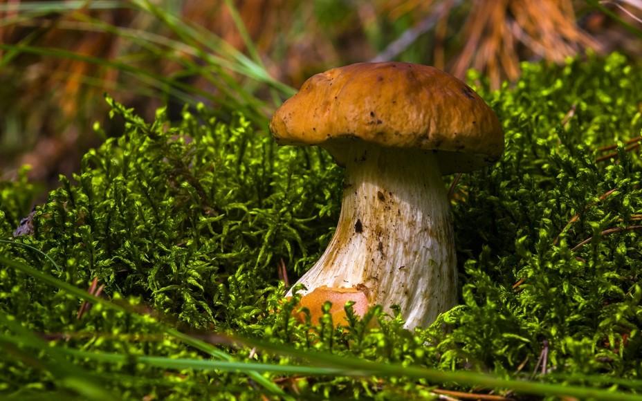 Летние грибы в 2019 году