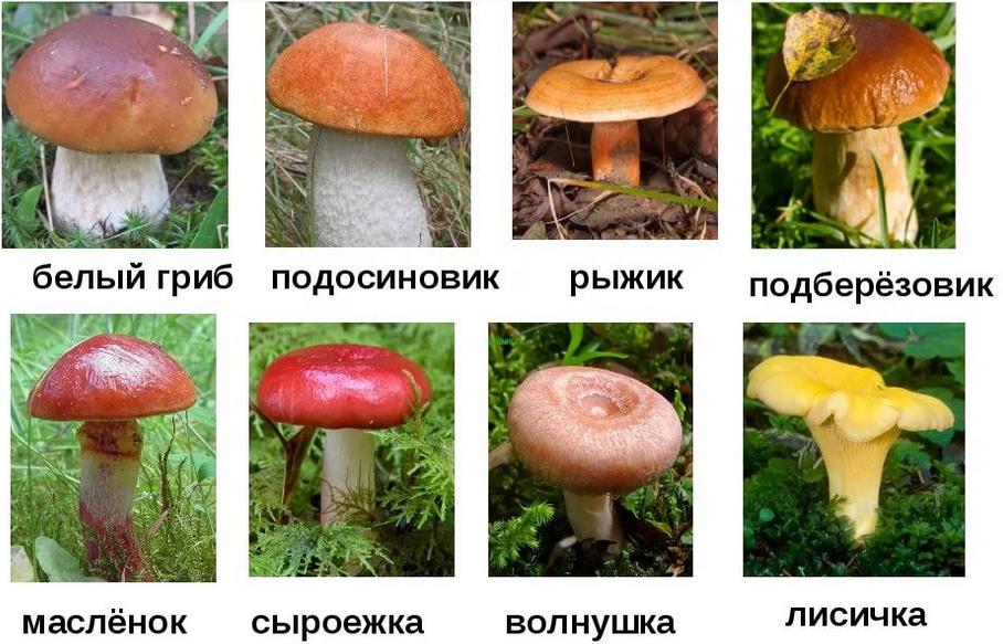 картинки грибов с названиями съедобные и несъедобные, фото 1