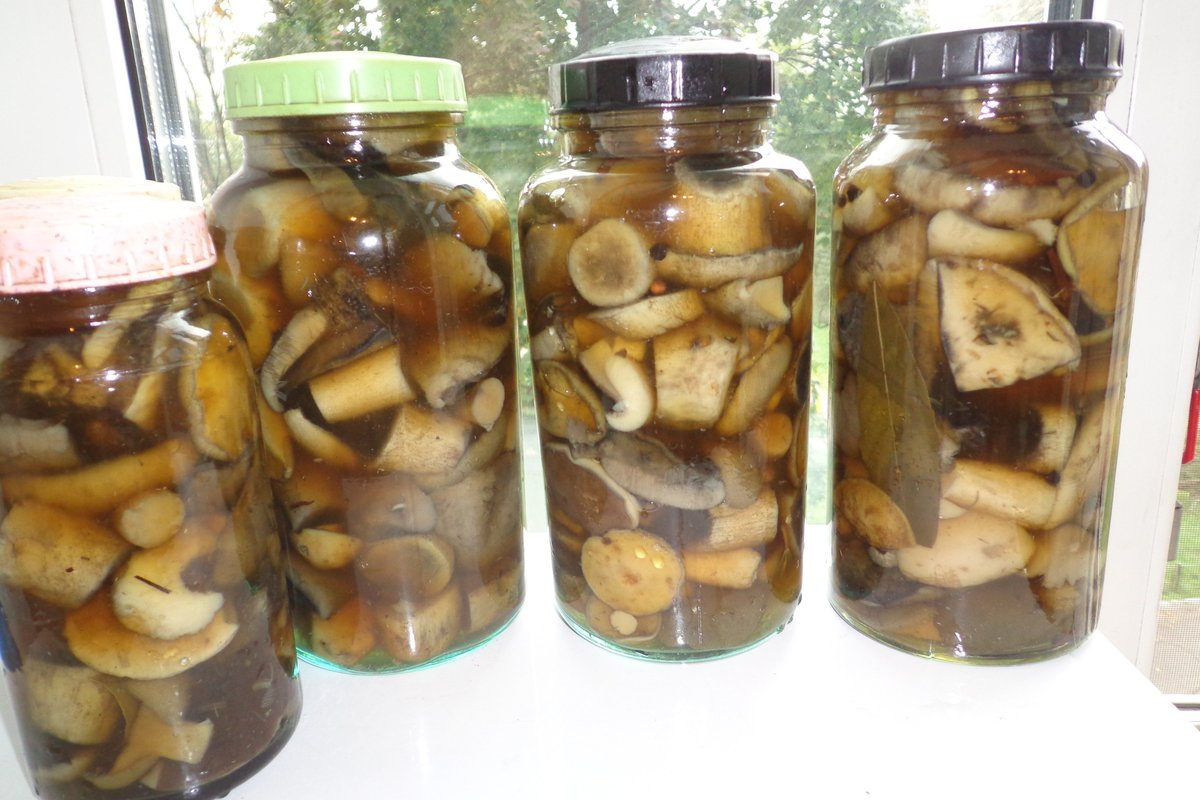 маринованные валуи - грибы без соли в банках на фото