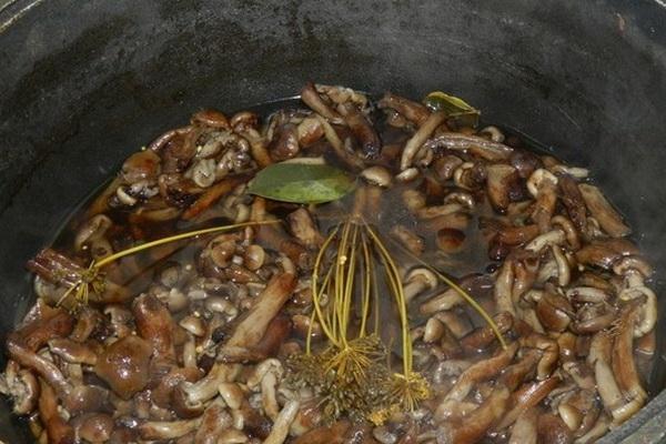 маринованные опята с укропом и семенами горчицы
