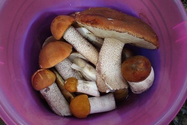 маринованные белые подосиновики маринованные на зиму, рецепт с фото