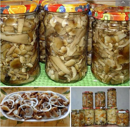 маринованные белые подосиновики маринованные на зиму, рецепт с фото 2