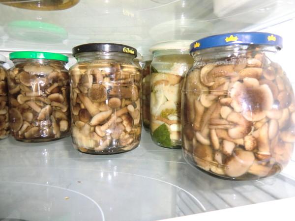 cрок хранения маринованных опят в холодильнике дома