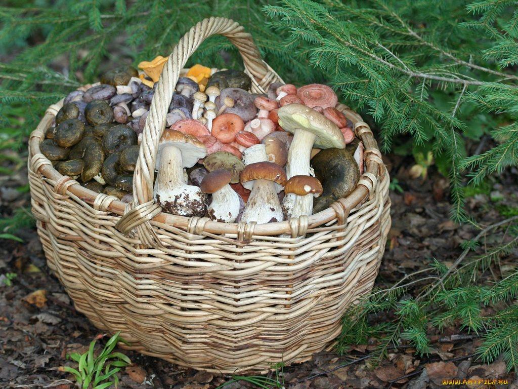 какие грибы мариновать на зиму лучше фото 1
