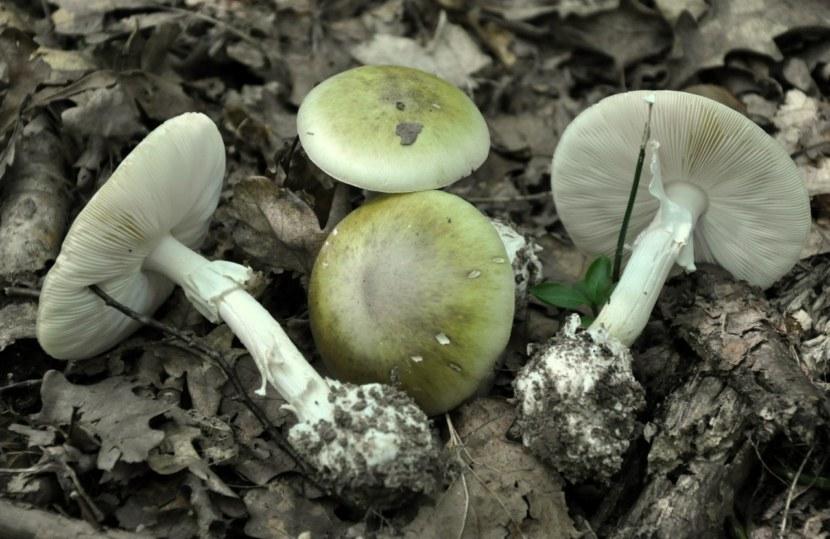 Случаи и причины отравления грибами 2019