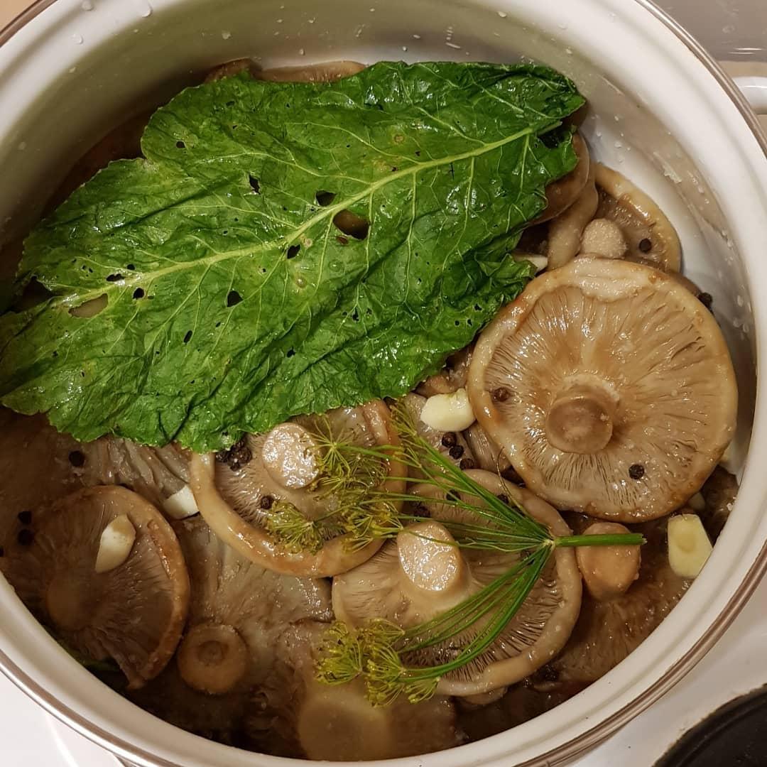 простой рецепт засолки груздей на зиму холодным способом