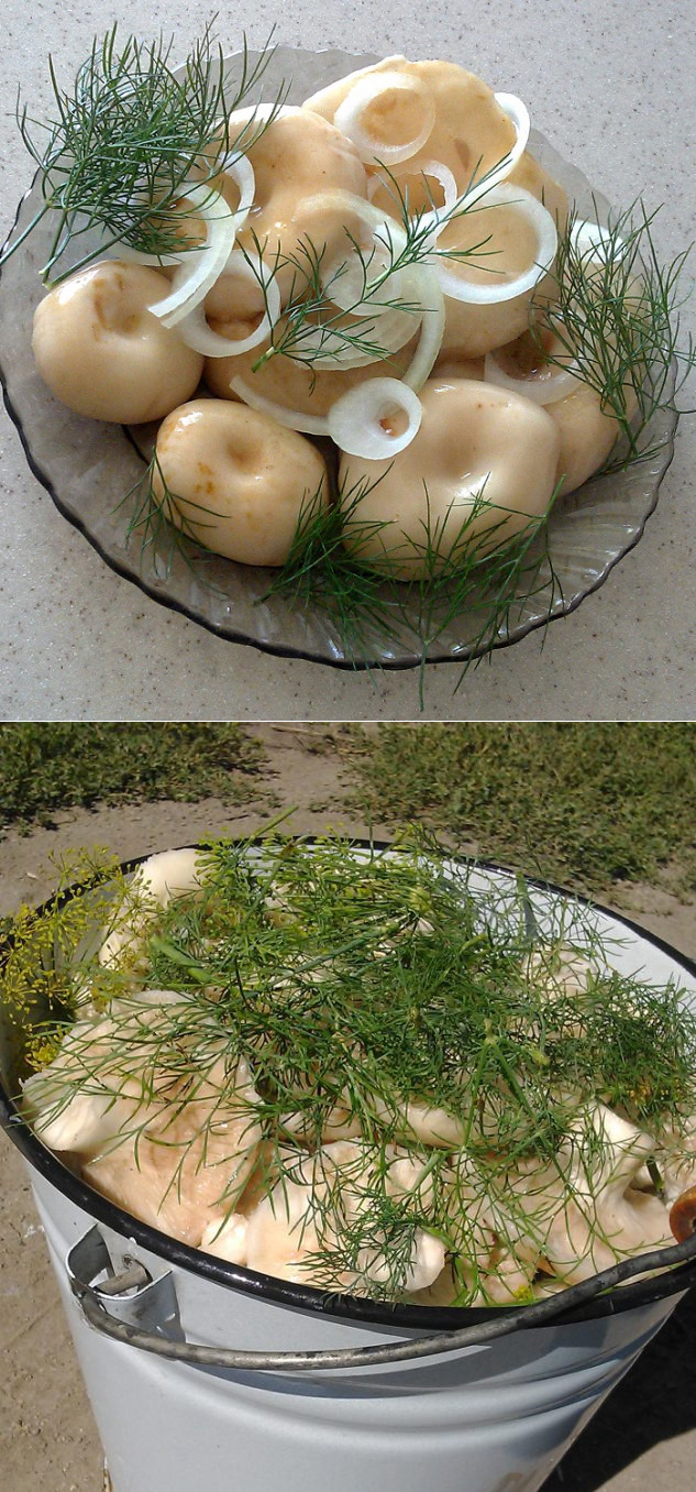 рецепт соленых груздей на зиму с фото такое опухоль