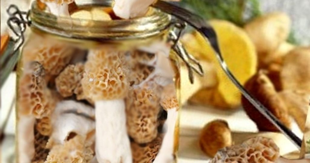 Гриб Сморчок - самый весенний из всех грибов