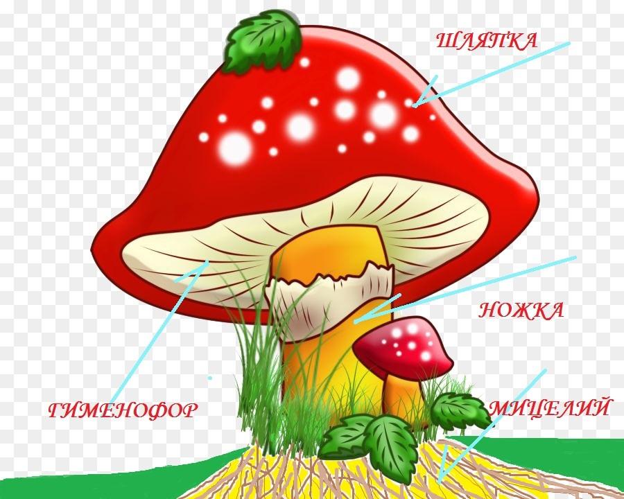 Строение гриба – от грибницы до шляпки