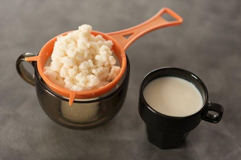 Молочный гриб – бесконечные полезные свойства и редкие противопоказания волшебного тибетского кефира