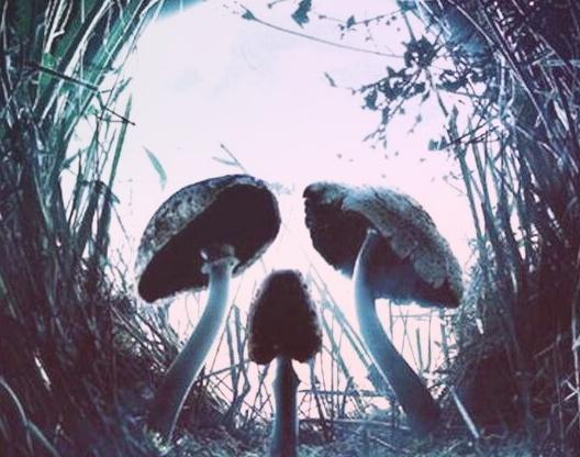 Ядовитые Грибы – опасная красота природы