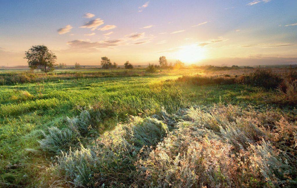 Грибы Еринги – сытный подарок степной травы