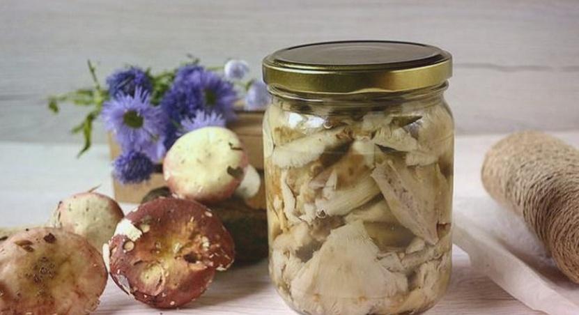 Как солить сыроежки – недорого, быстро и вкусно