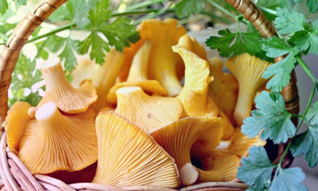 Замороженные и сушеные лисички – как все сделать вкусно и грибы не начали горчить
