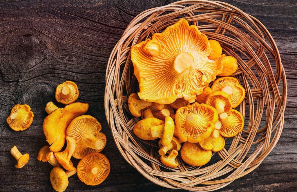 Грибы лисички, их польза, лечебные свойства и лечение болезней