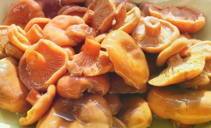 Маринованные рыжики – вкусные, веселые и хрустящие