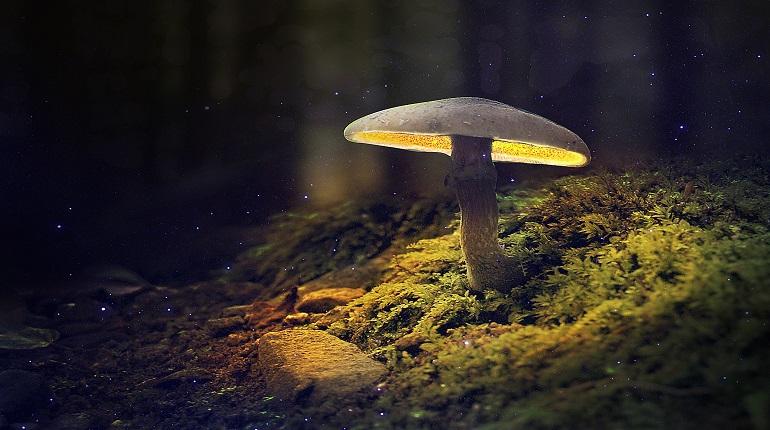 Российские учёные объяснили, почему светятся грибы | moika78.ru - Новости  СПб