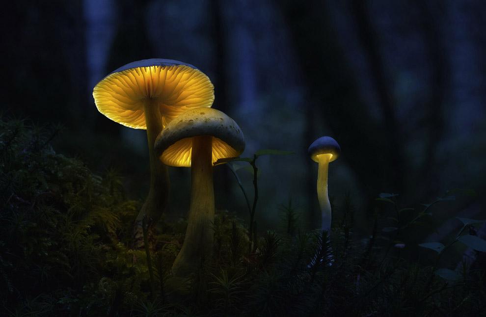 Светящиеся грибы?!