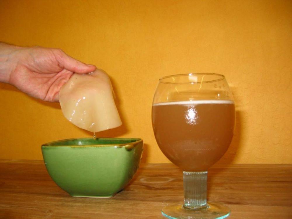 Как вырастить чайный гриб? Как ухаживать за чайным грибом? Полезные  свойства и противопоказания. Приготовление в домашних условиях. Где взять?