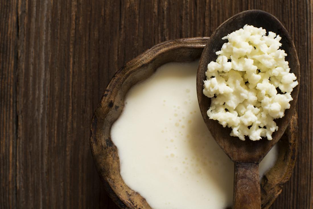 За что в России любят тибетский молочный гриб?