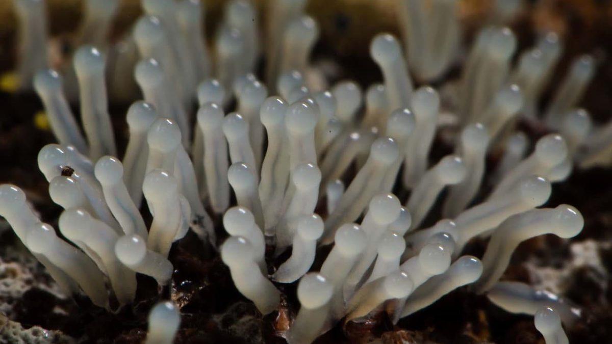 Где произрастает гриб слизевик и можно ли употреблять его в пищу?
