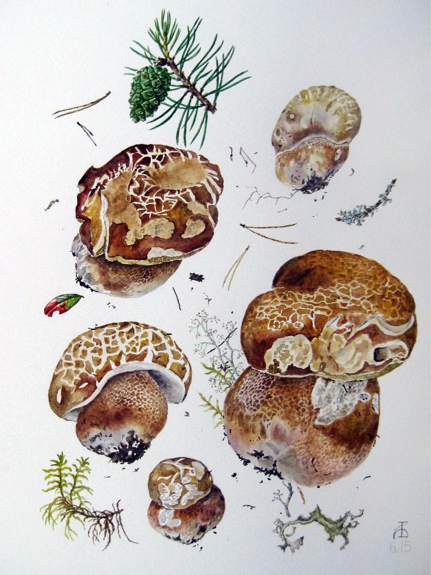 Общие признаки представителей грибного царства