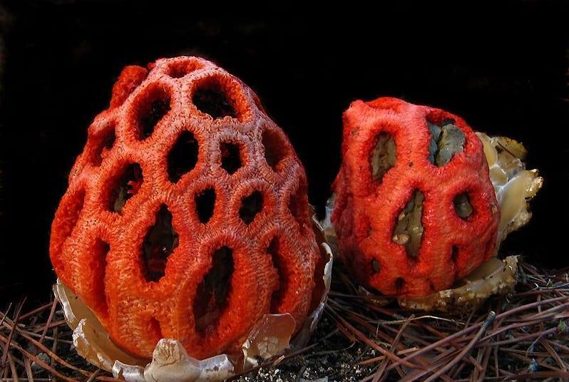 Какие существуют необычные грибы и в чем их примечательные особенности?
