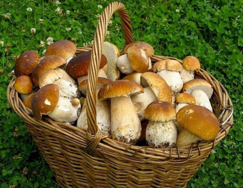 Чем полезны грибы для взрослых и детей