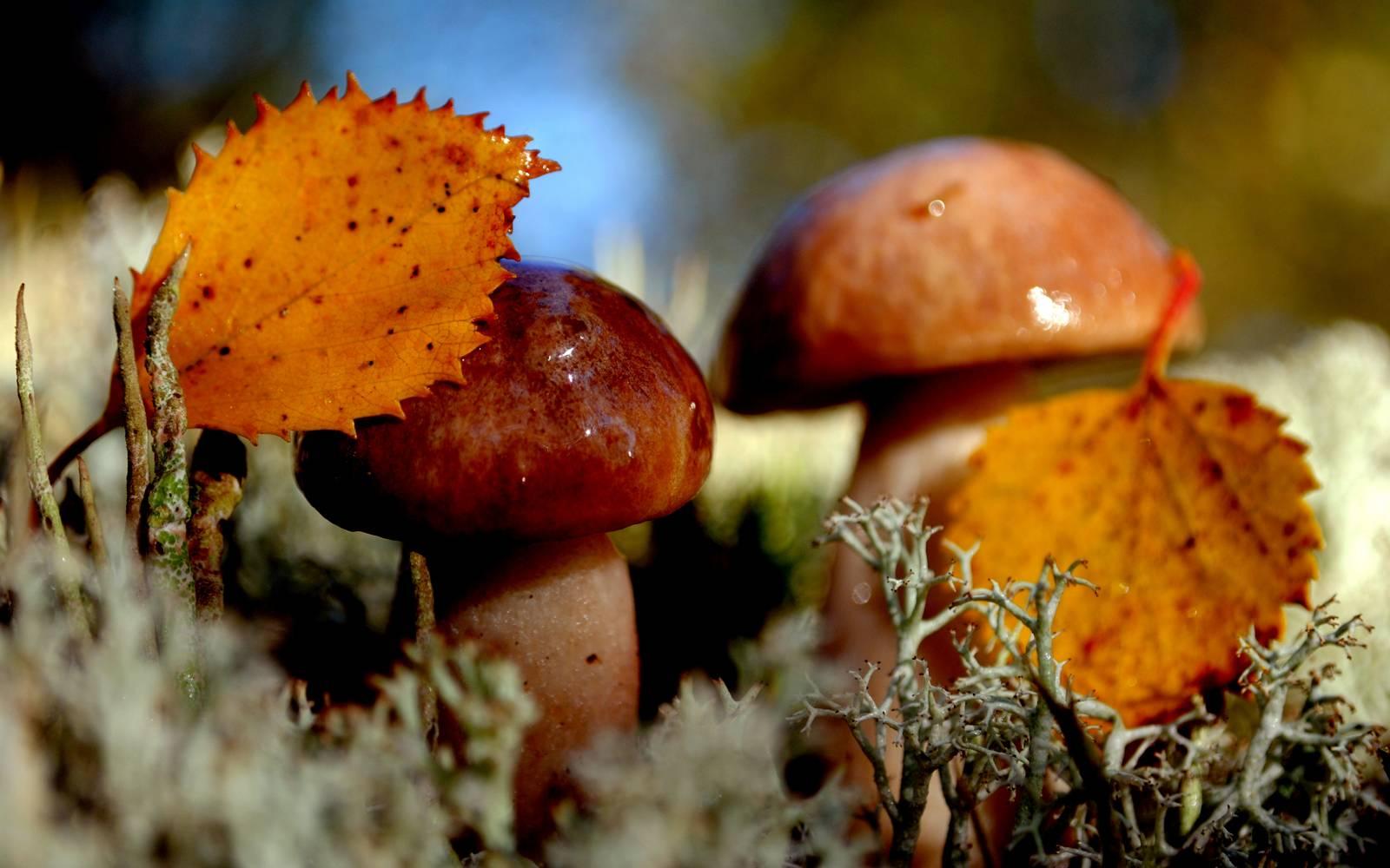 Каким образом происходит питание грибов и в чем его особенности?