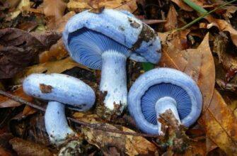 Самые интересные факты о грибах и о их жизнедеятельности
