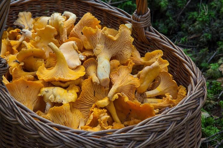 Кому нельзя есть грибы и какие? Можно ли грибы беременным, детям и людям с диабетом