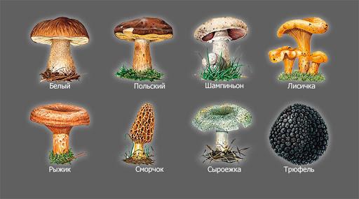 Что такое грибы и с чем их едят